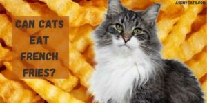 Can Cats Eat French Fries? Can French Fries Kill Cats?