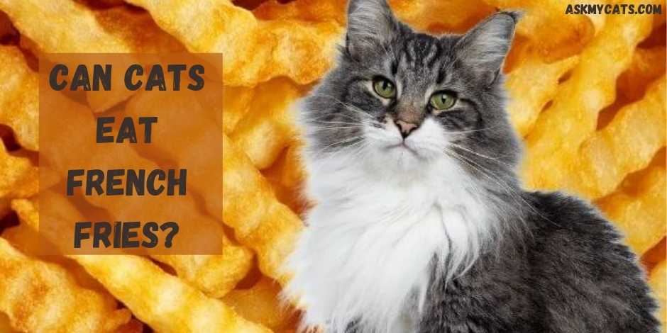 Can Cats Eat French Fries?