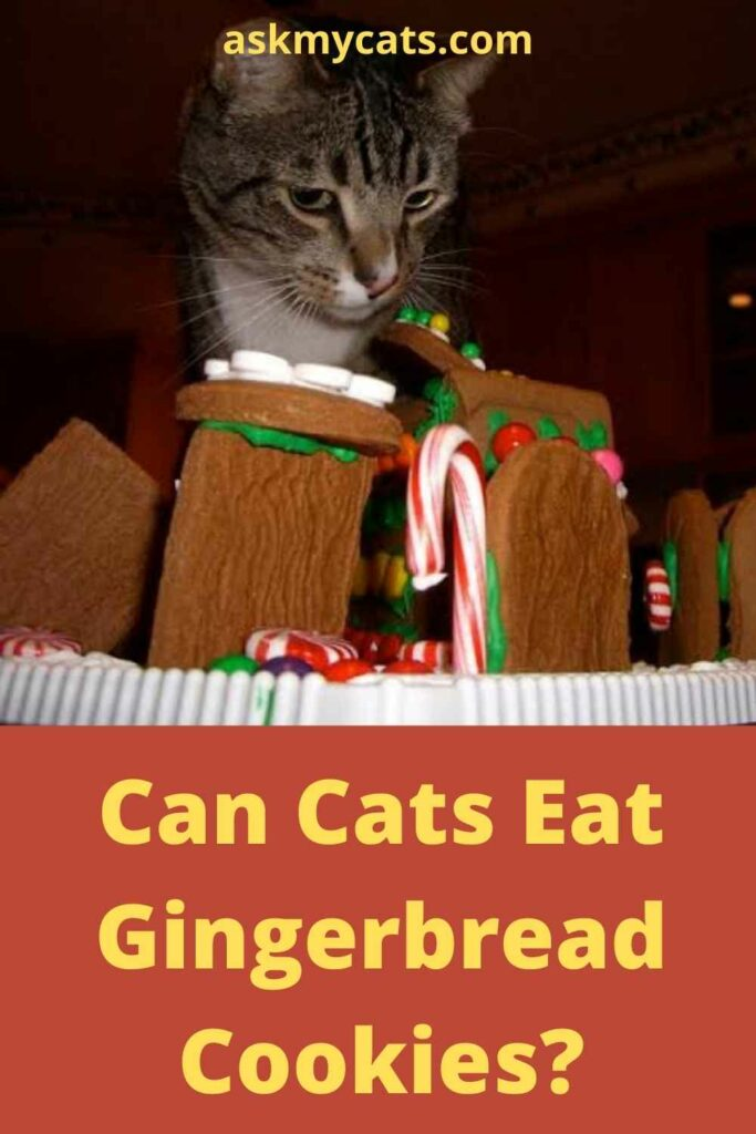 Can Cats Eat Gingerbread Cookies?