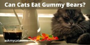 Can Cats Eat Gummy Bears? Are They Toxic?