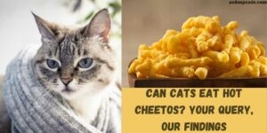 Can Cats Eat Hot Cheetos? Your Query, Our Findings