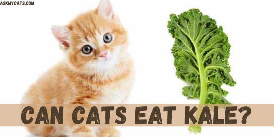Can Cats Eat Kale?