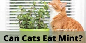 Can Cats Eat Mint? Is Mint Safe For Cats?