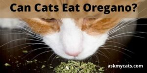 Can Cats Eat Oregano? Is Oregano Safe For Cats To Consume?