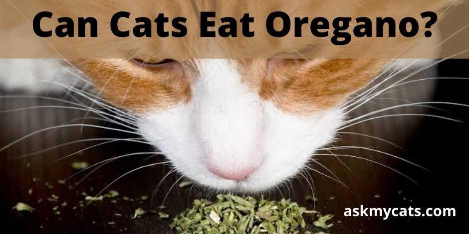 Can Cats Eat Oregano?