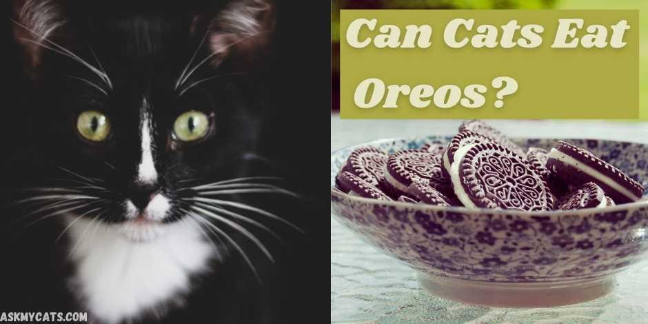 can cats eat Oreos?