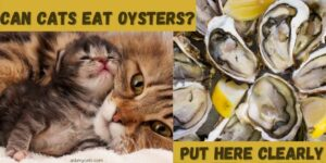 Can Cats Eat Oysters? What Do I Do If My Cat Ate Oysters?
