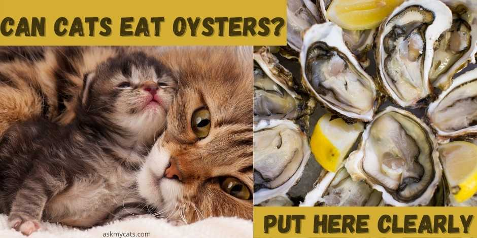 can  cats eat oysters? put here clearly