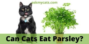 Can Cats Eat Parsley? Do Cats Like Parsley?