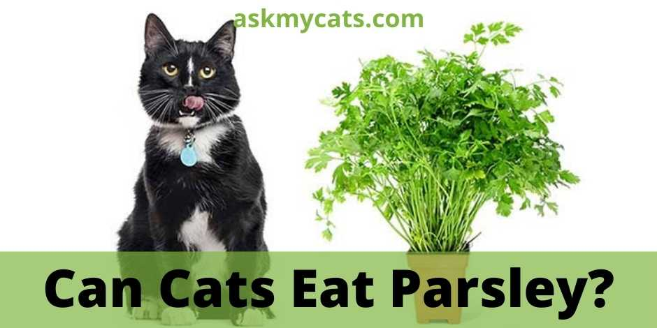 Can Cats Eat Parsley?