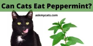 Can Cats Eat Peppermint? Is Peppermint Toxic To Cats?