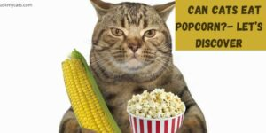 Can Cats Eat Popcorn?- Let's Discover