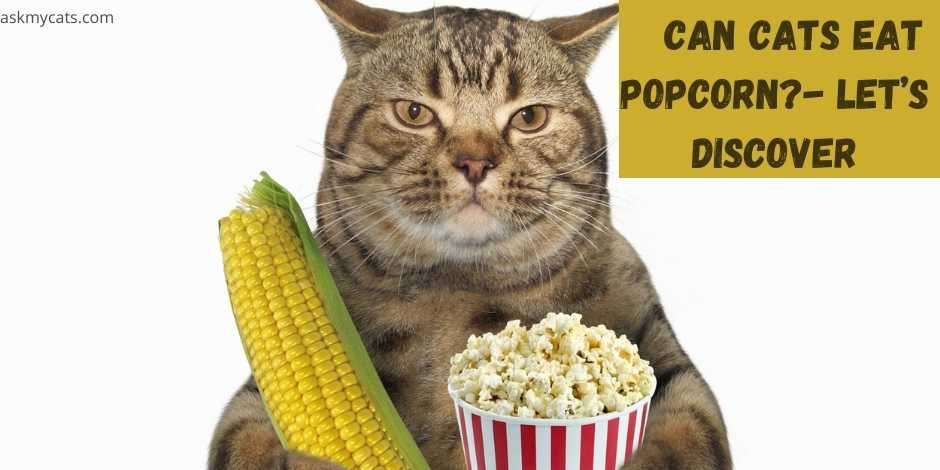 can cats eat popcorn? lets discover