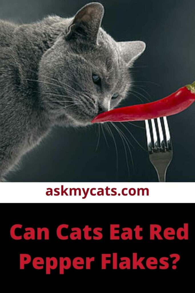 Can Cats Eat Red Pepper Flakes?