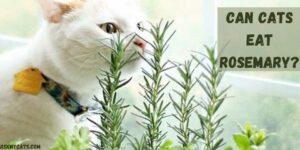 Can Cats Eat Rosemary? Does Rosemary Make Cats High?