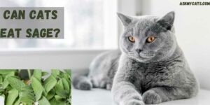 Can Cats Eat Sage? Is Sage Poisonous To Cats?