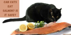 Can Cats Eat Salmon? Is It Safe?