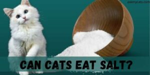 Can Cats Eat Salt? How Much Salt Is Safe For Cat?