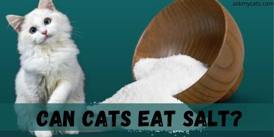 Can Cats Eat Salt?