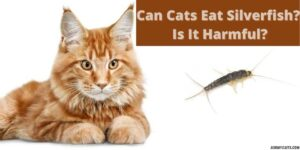 Can Cats Eat Silverfish? Is It Harmful?