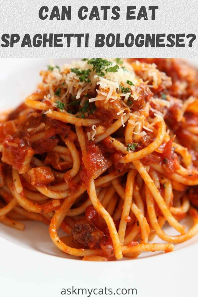 can cats eat spaghetti bolognese
