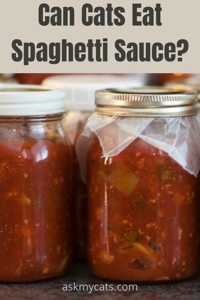 can cats eat spaghetti sauce