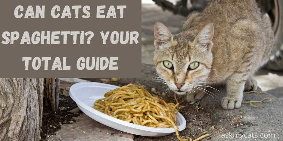 can cats eat spaghetti? your total guide