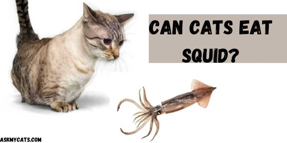 Can Cats Eat Squid?
