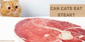 Can Cats Eat Steak? Check Before You Feed!