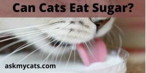 Can Cats Eat Sugar? Is It Toxic To Your Cat?