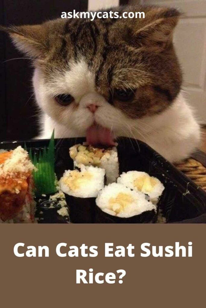 Can Cats Eat Sushi Rice?