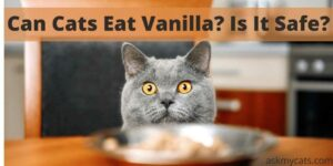 Can Cats Eat Vanilla? Is It Safe?