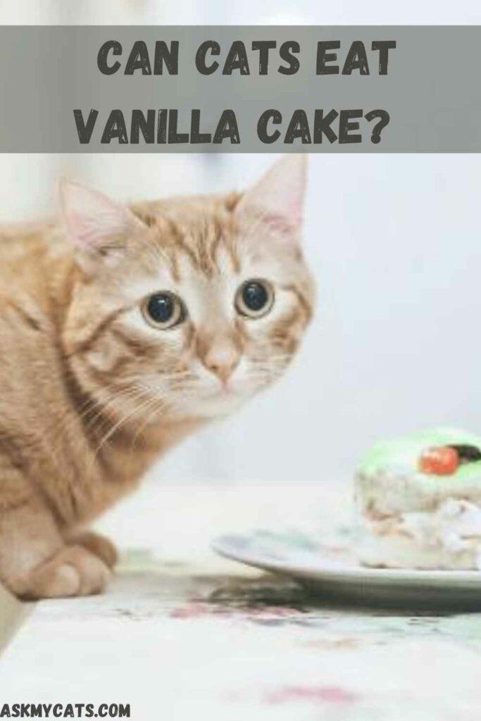 Can Cats Eat Vanilla Cake?