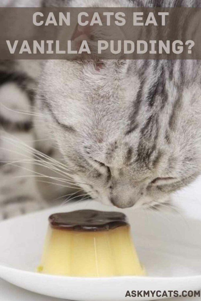 Can Cats Eat Vanilla Pudding?