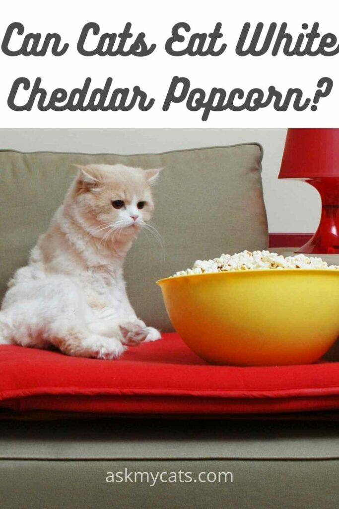 can cats eat white cheddar popcorn?