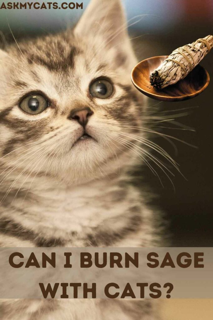 Can I Burn Sage With Cats?