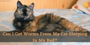 Can I Get Worms From My Cat Sleeping In My Bed?