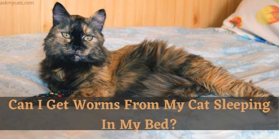 My Cat Has Worms Can I Get Them?