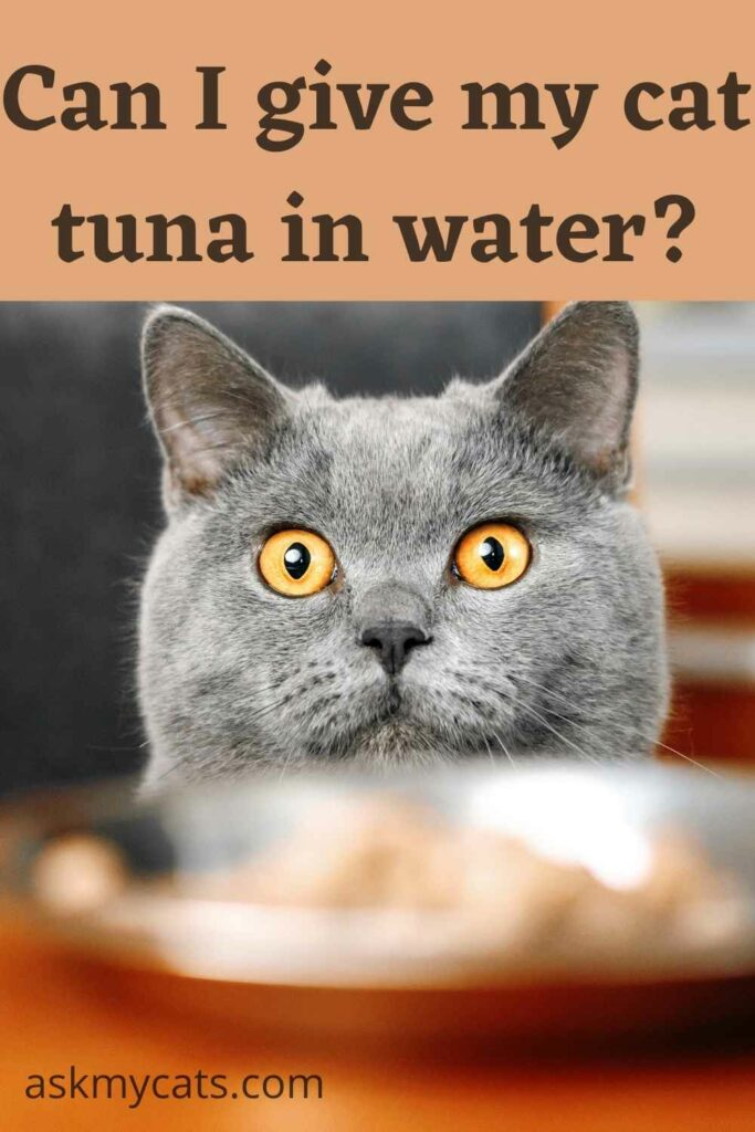 can i give my cat tuna in water