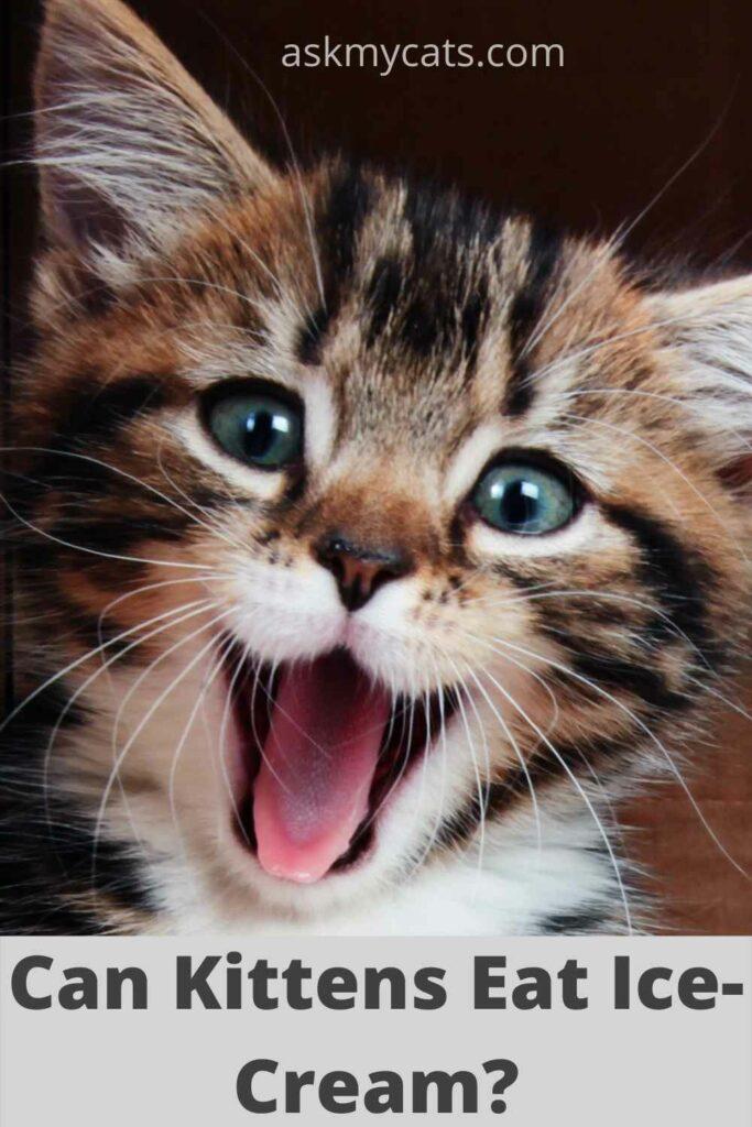 can kitten eat ice cream