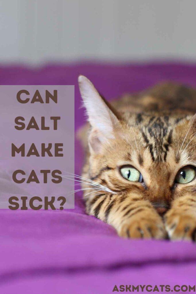 Can Salt Make Cats Sick?
