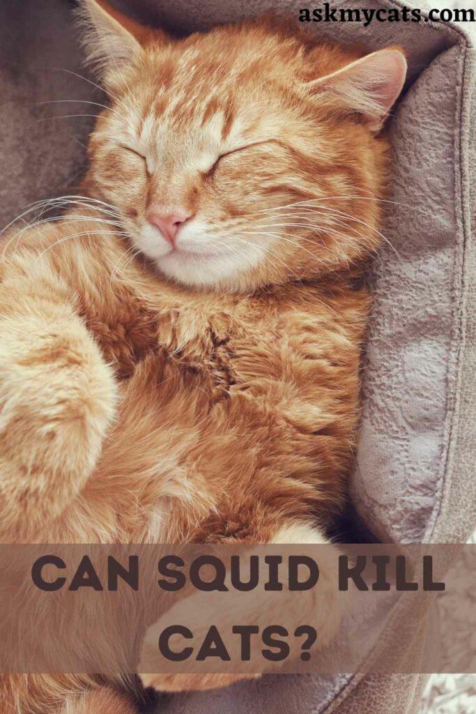 Can Squid Kill Cats?