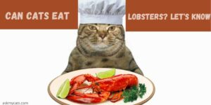Can Cats Eat Lobsters? Is Lobster Safe For Cats?