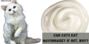 Can Cats Eat Mayonnaise? If Not, Why?