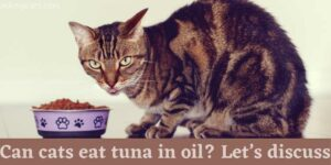 Can Cat's Eat Tuna In Oil? Let's Discuss