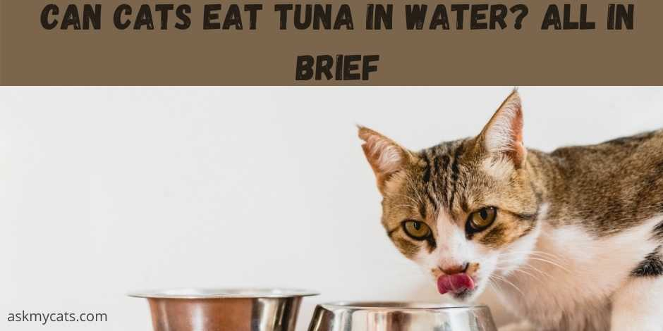 can cats eat tuna in water? all in brief