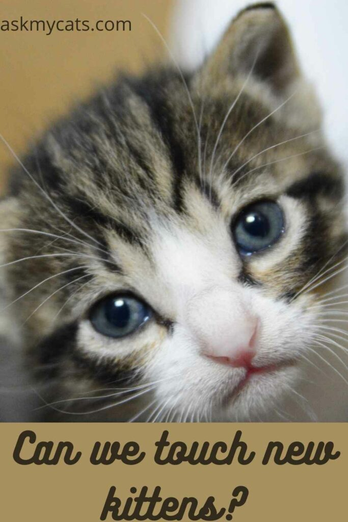 Can-we-touch-new-kittens