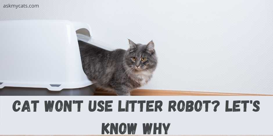 cat wont use litter robots? lets know why.