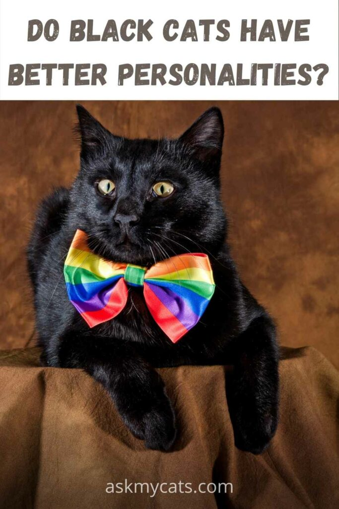 do black cats have better personalities