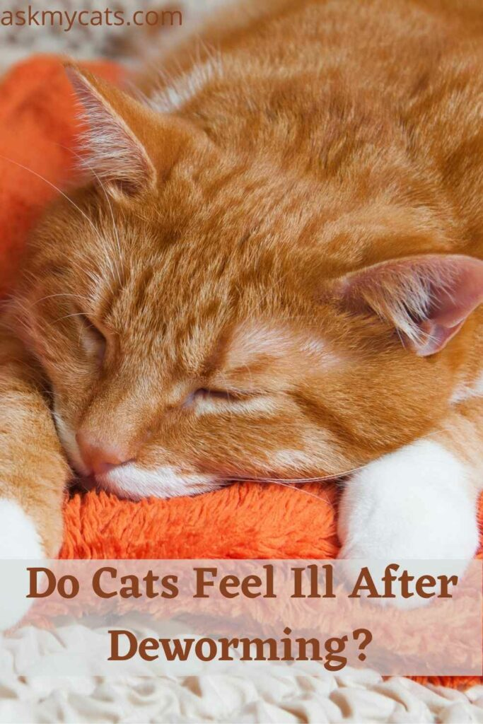 Do Cats Feel Ill After Deworming?